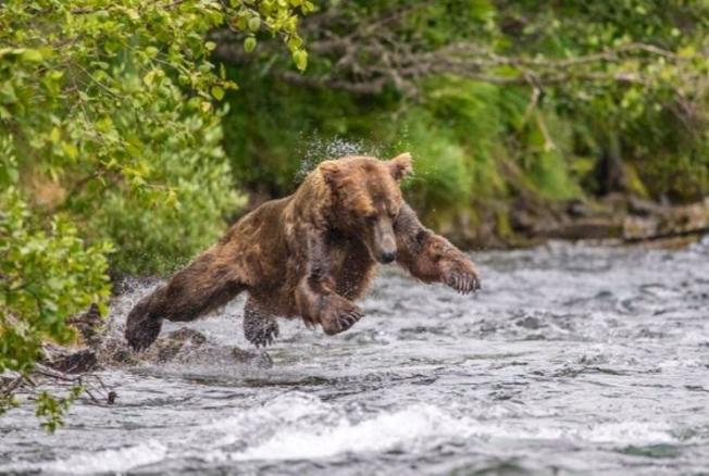 Забавная медвежья рыбалка попала вобъектив фотографа