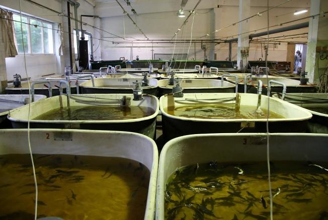 где выращивают рыбу