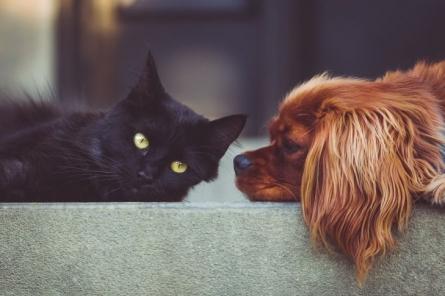 Что делать, если у собаки аллергия на корм?