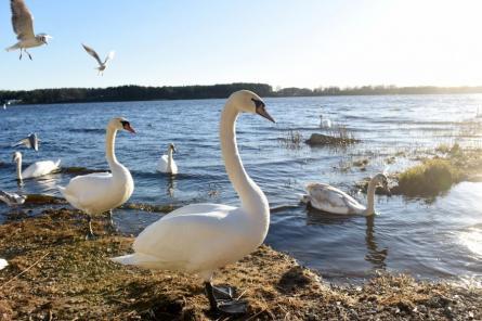 Власти РФ рассказали о состоянии заболевших новым видом птичьего гриппа
