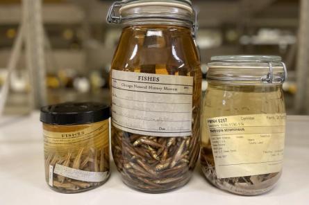 Рыбы давно едят микропластик