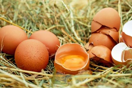 В России заявили, что для производства Спутника V не используют яйца