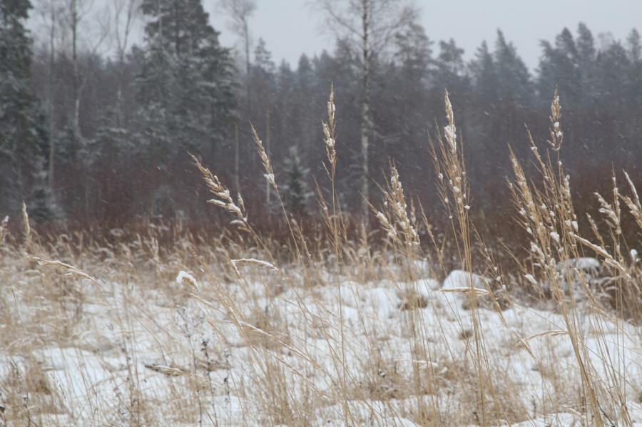 Снег вСалацгривском крае, фото LETA