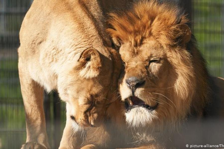 Фото: dw.com