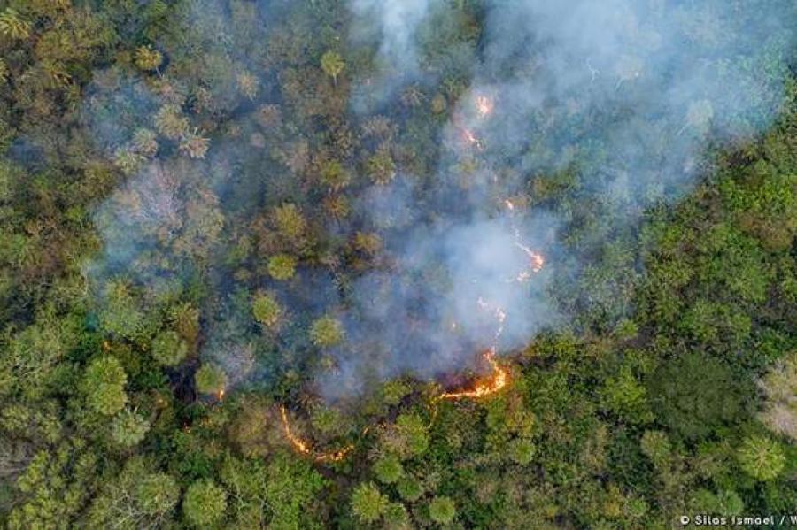 Фото: WWF