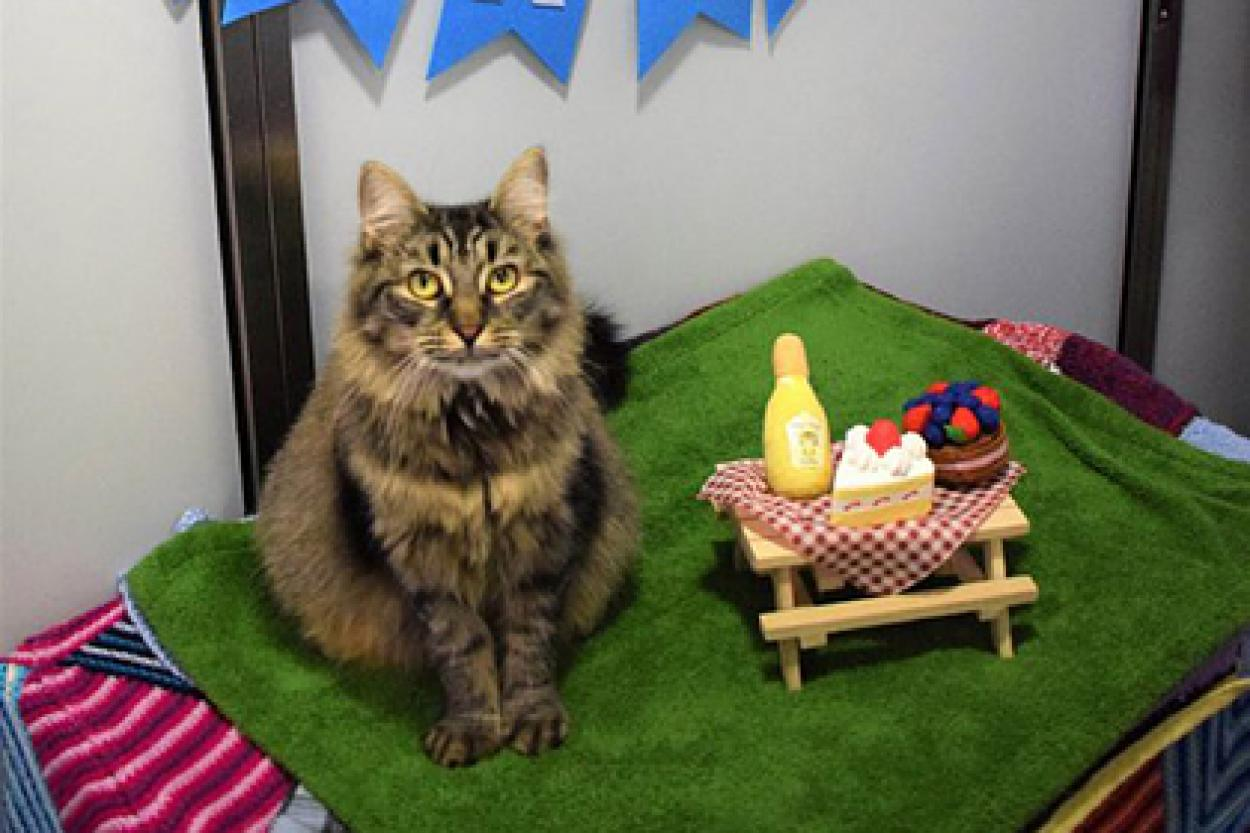 Фото: Battersea Dogs and Cats Home