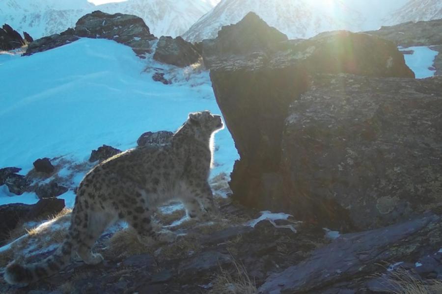 Хан в горах.